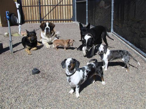 Dog boarding Prescott Prescott Valley